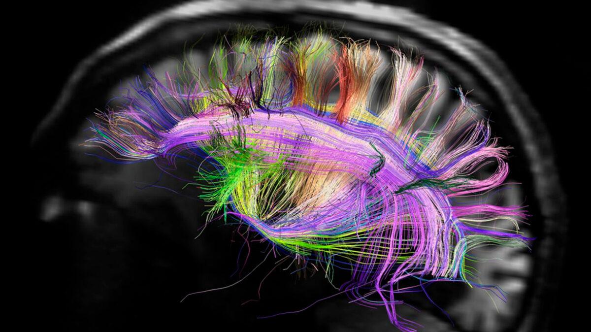 Metrics, Metricser, Colaboraciones, emociones, neuroinformática, análisis de datos,